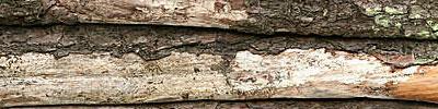 woodtexture15